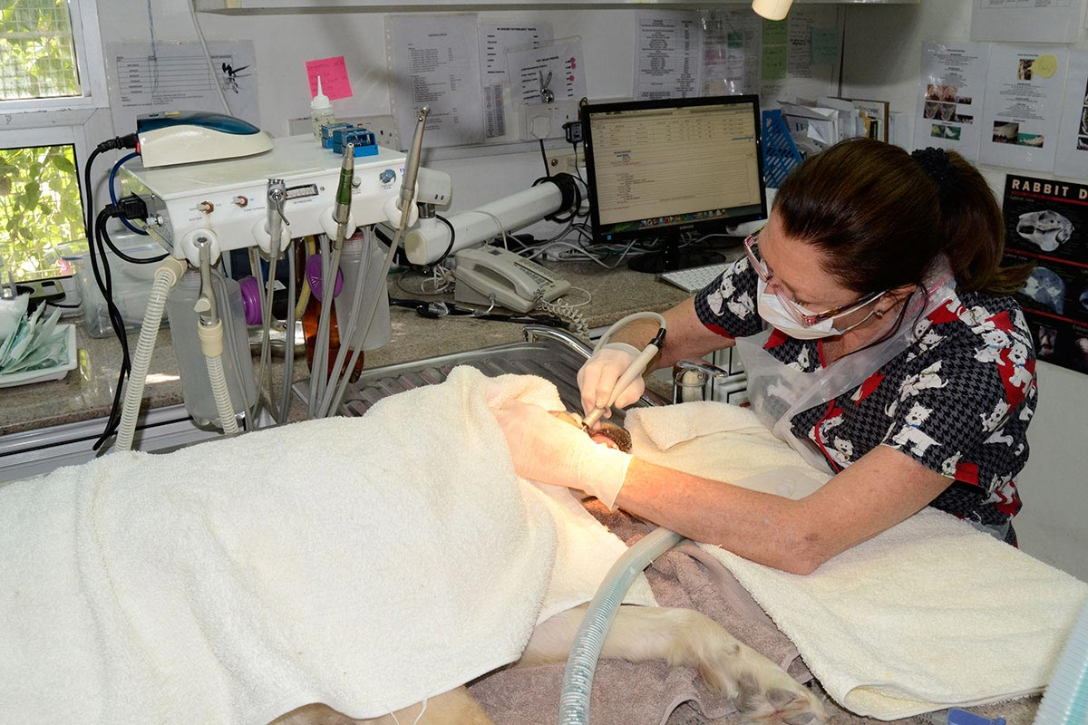 Dr-Nonie-doing-a-dental-procedure