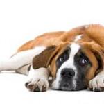 dog ill